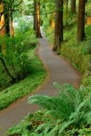 forest-path-0409-0615-48mb (1)